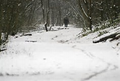 Worsley Woods in Winter