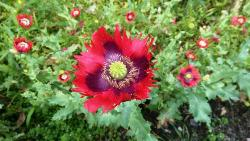 Wildflower Work at Duke's Drive